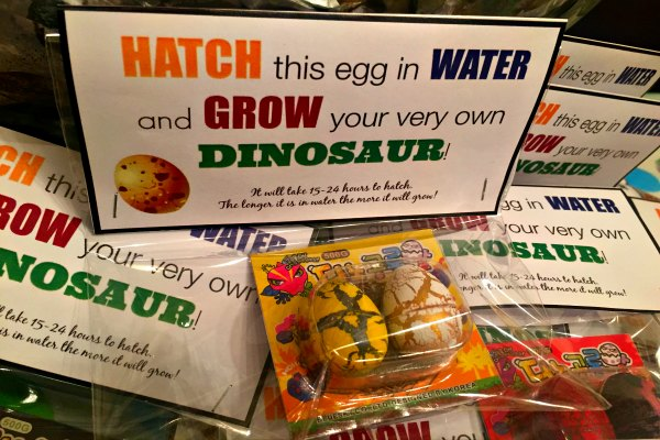 Dinosaur Eggs that Grow in Water