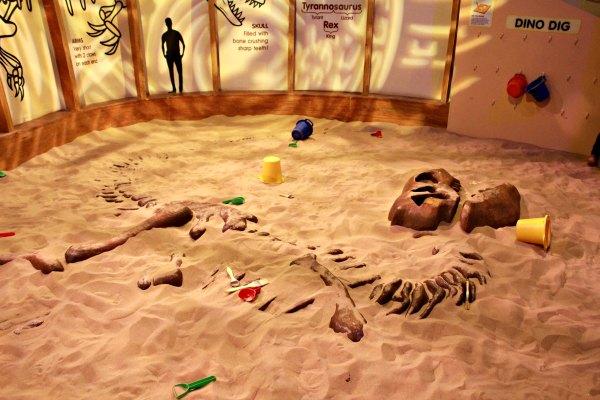A Paleontologist's Fossil Dig