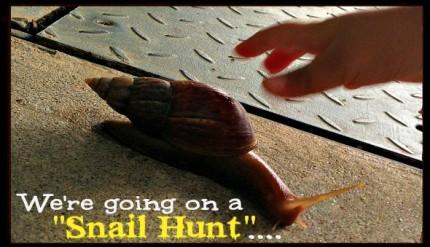 Snail Hunt - Post Rainy Day Kid's Activity