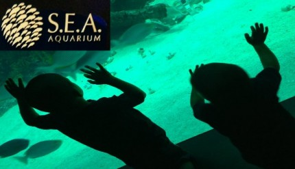 SEA Aquarium Resorts World Sentosa Singapore Review