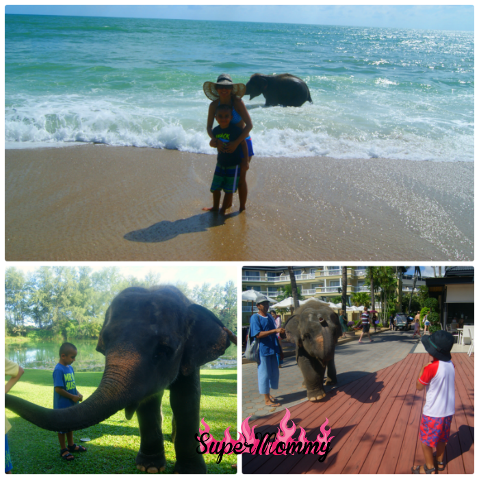 Lucky the Elephant - Angsana Laguna Phuket Thailand