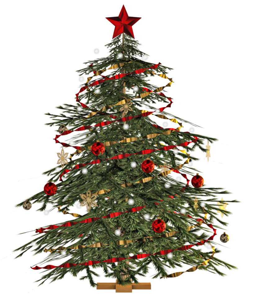 buy-real-live-christmas-tree-singapore