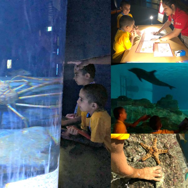 Review Ocean Dreams Sleepover Resorts World SEA Aquarium Singapore Kids Unique Birthday Venue