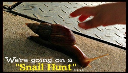 Snail Hunt - Post Rainy Day Kid's Activity