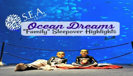 Ocean Dreams Sleepover Resorts World SEA Aquarium Singapore Kids Activities