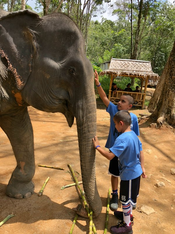 Elephant Jungle Sanctuary Reviews - Things to do in Phuket Chiang Mai with Kids 3