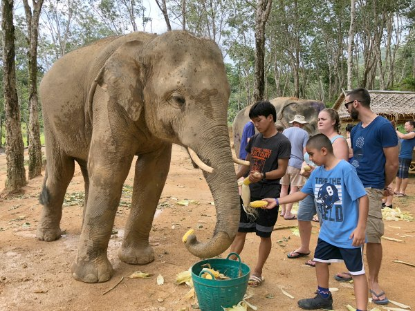 Elephant Jungle Sanctuary - Things to do in Phuket Chiang Mai with Kids - Activities - Promotions Discount Coupon